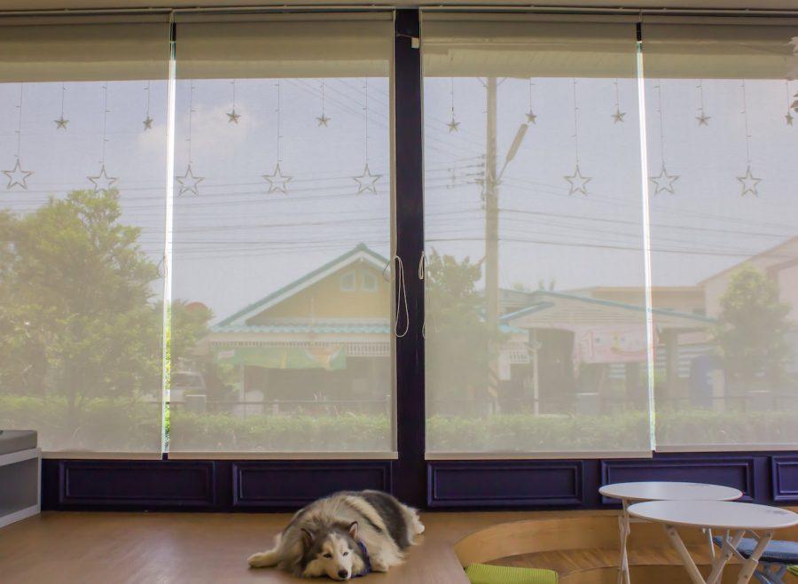 Por que cortinas e persianas são itens importantes para a decoração de sua casa?