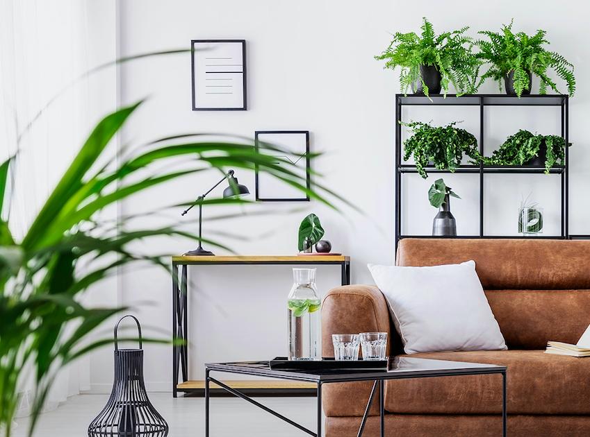 Plantas, hortas e jardins em apartamentos são possíveis: veja como!